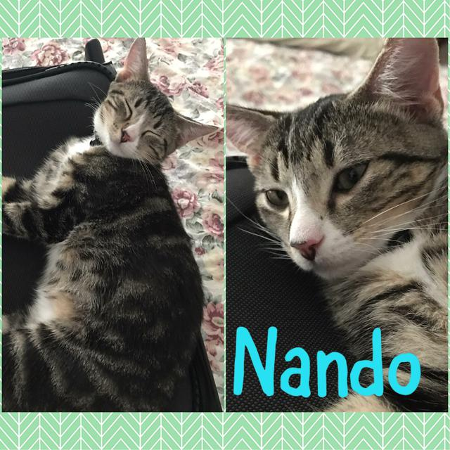 Squeaky (Nandos)