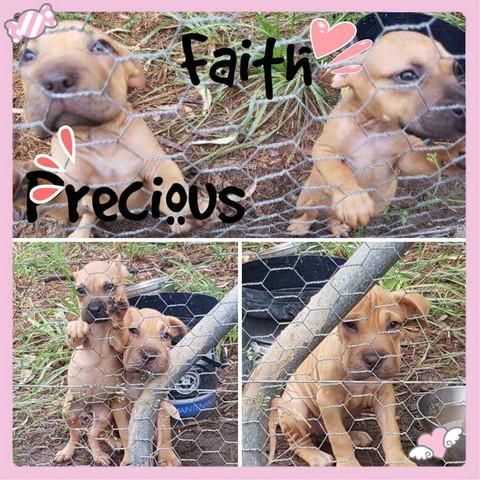 Faith and Precious