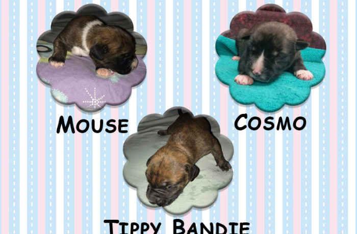 Tippy Bandie, Mouse & Cosmo